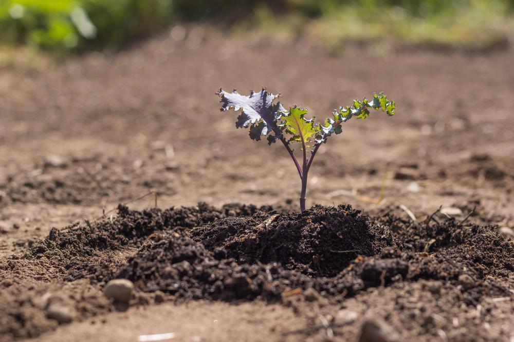 GardenBlog-4.jpg