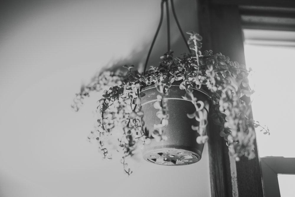 lamplight2017_meganlendmanphotography_favs-13.jpg