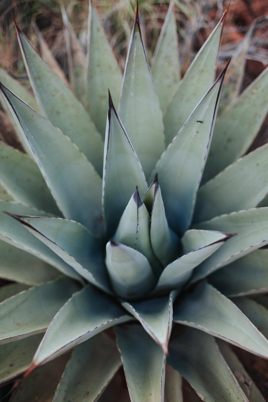 meganlendmanphotography_explore_2018-arizona-45.jpg