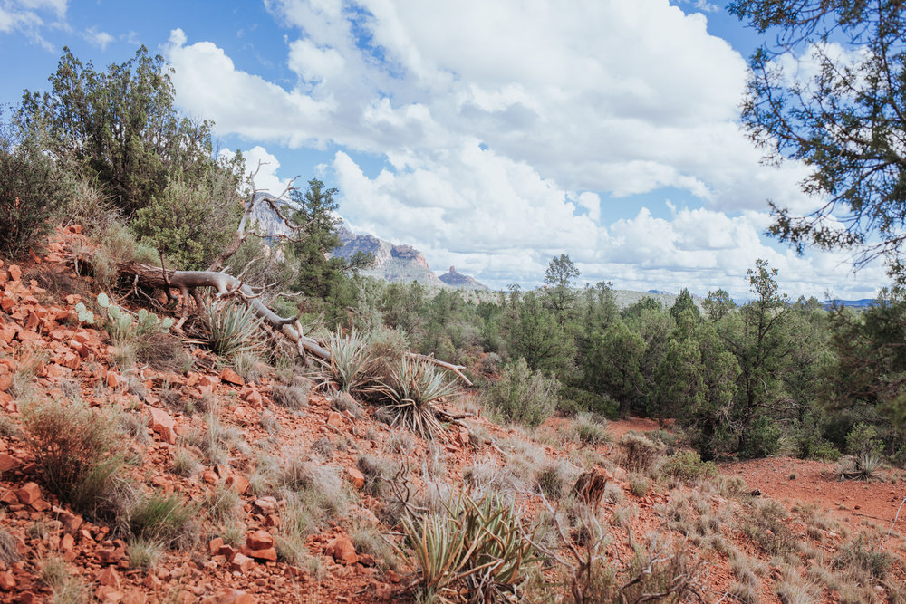 meganlendmanphotography_explore_2018-arizona-44.jpg
