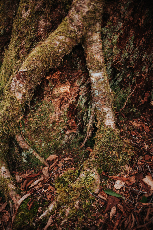 meganlendmanphotography_explore_2018_alumcavebluff-2.jpg
