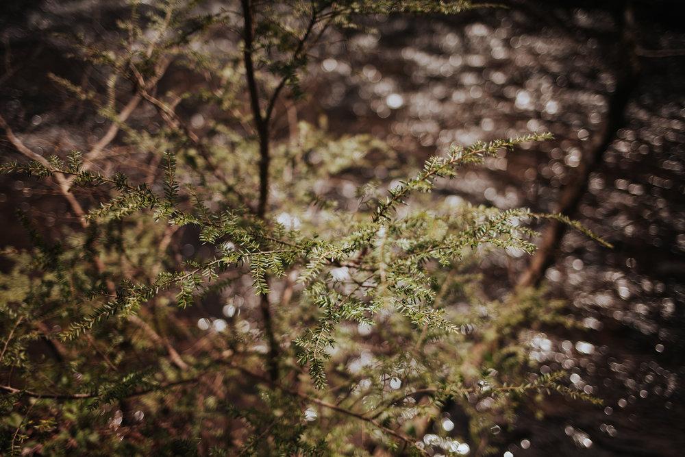 meganlendmanphotography_explore_2018_cadescove-23.jpg
