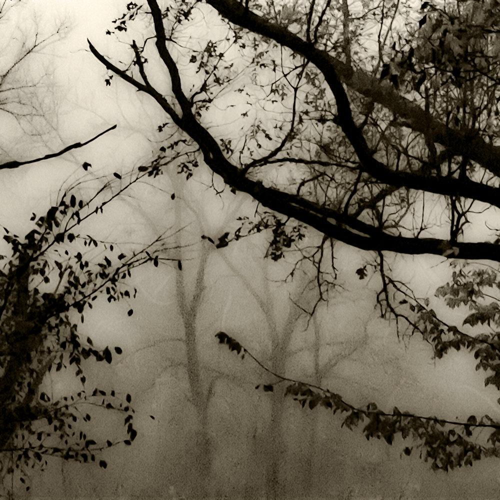 Shinrin 1 (Forest 1)