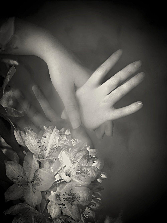 Midnight Lilies