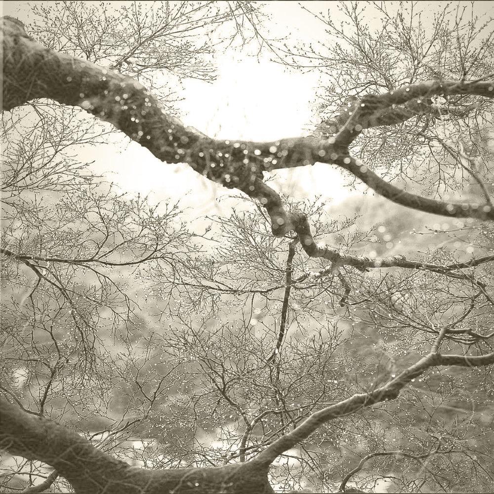 Ketsuro (Dewdrops)