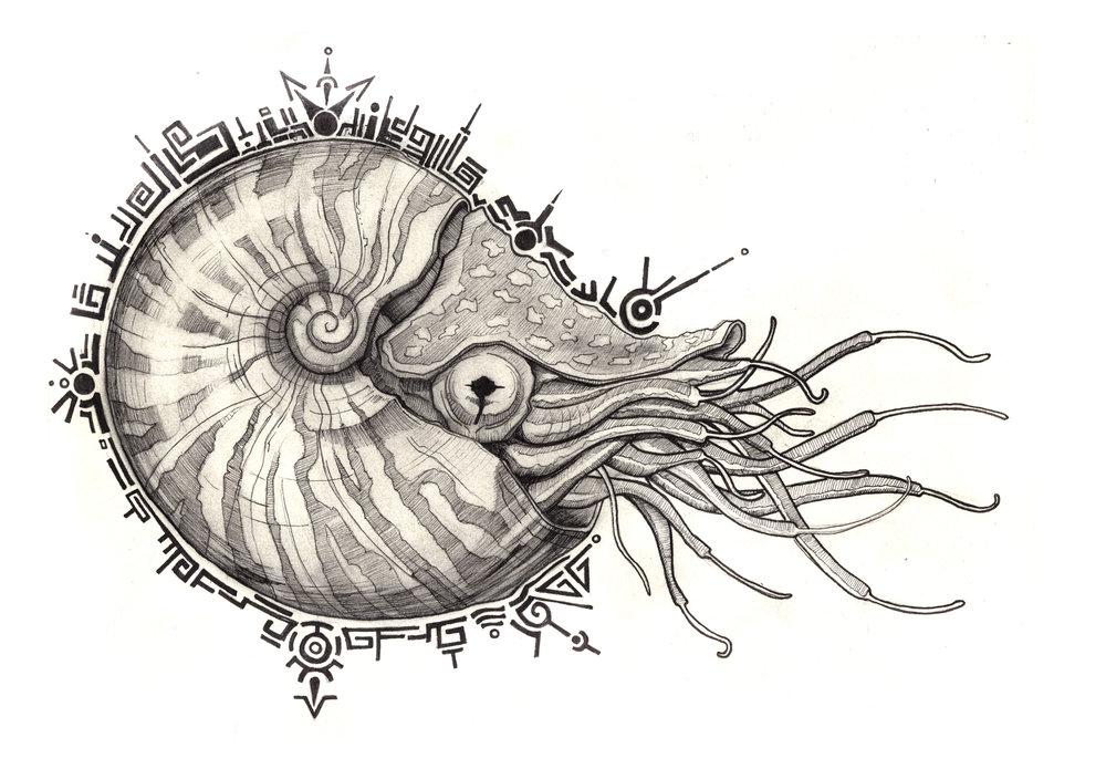 Sam-Nautilus.jpg