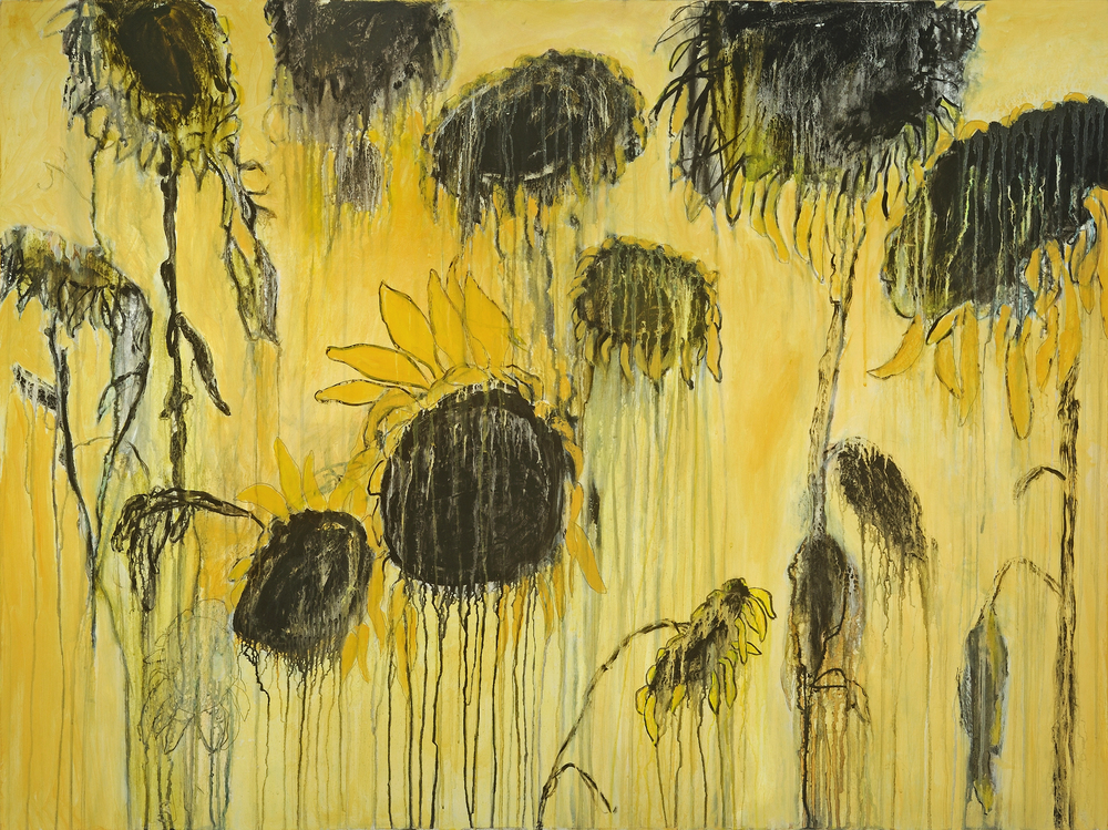 Wilting Helianthus