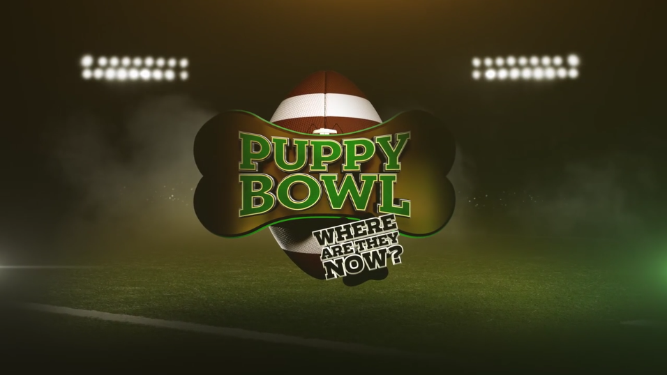 Puppy Bowl: Where Are They Now sniffs out your favorite K-9 contenders from over a decade of competition to see what they've been up to since gaining their football fame. In addition to reviewing highlights and penalties from Puppy Bowls past, we see how our mixed-breed MVPs (Most Valuable Puppies) and tail-wagging bench warmers have adjusted to life after retirement. Since being adopted, these dogs do wake up calls instead of play calls, never get a penalty for illegal napping, and their workouts include mountain biking and walking the runway.