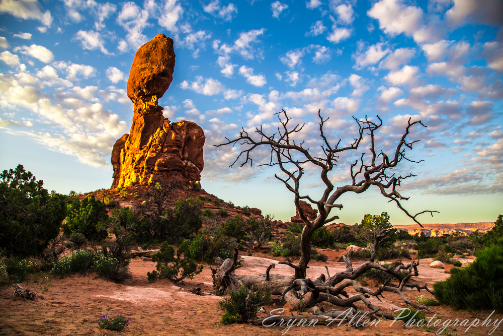 Balanced Rock with the skeleton of a tree