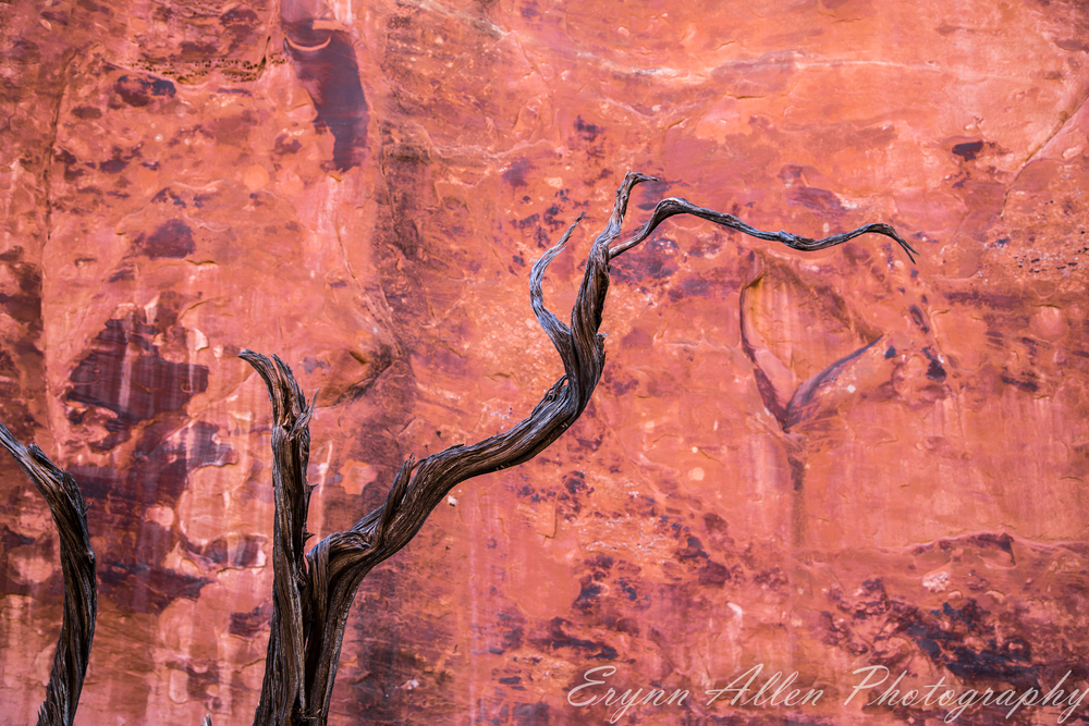 Sun bleached tree branch against red rock wall