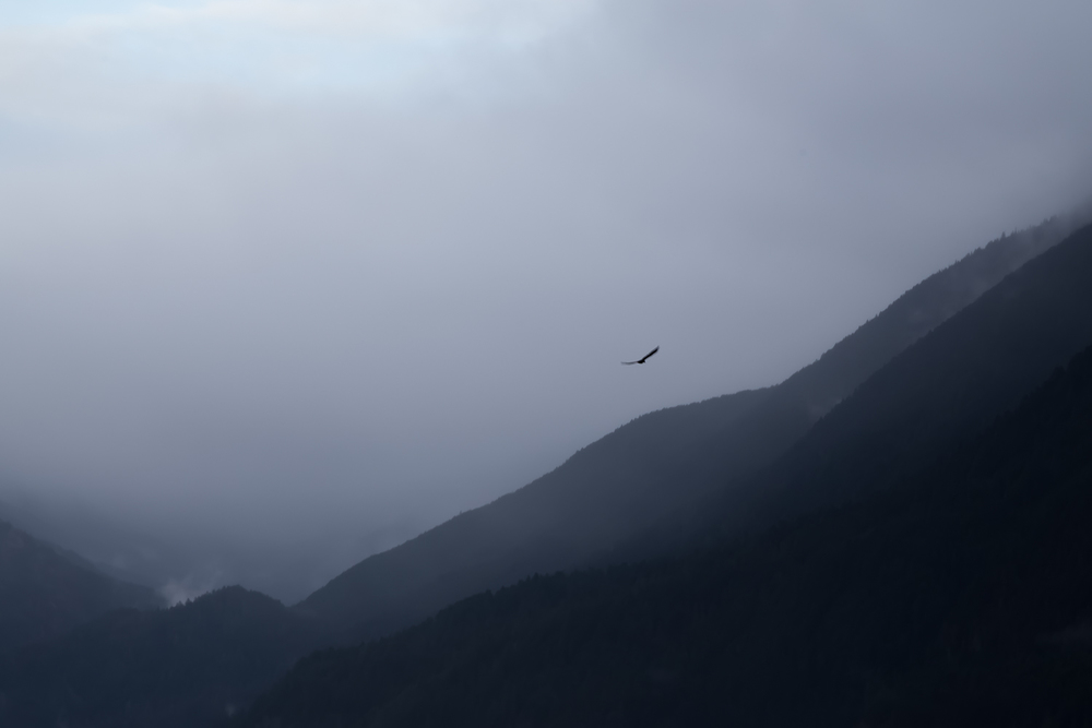 Eagle soaring above the lake