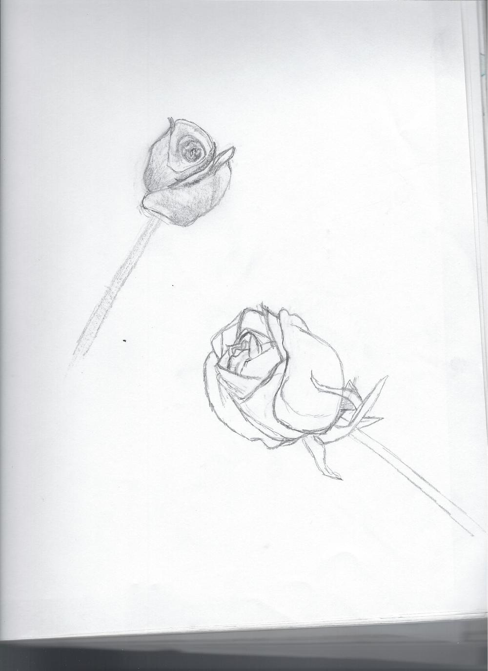 Roses Sketch