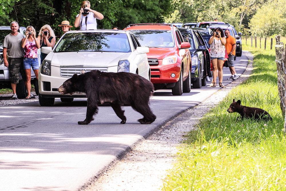 parks_public_bear_1500w.jpg