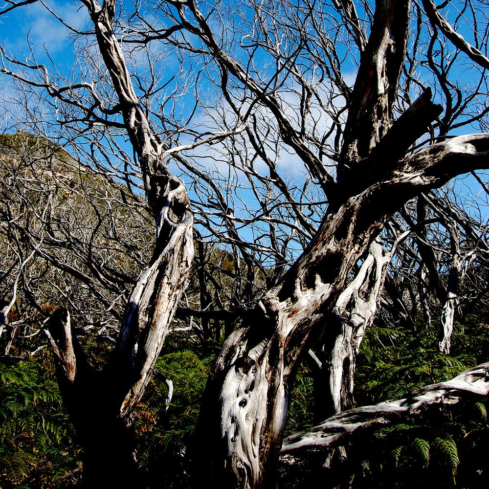 untitled #115 [wilson's promontory, victoria, australia, 2006]