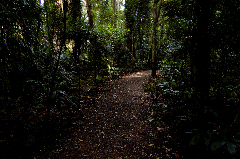 untitled #56 [dorrigo national park, new south wales, australia, 2010]