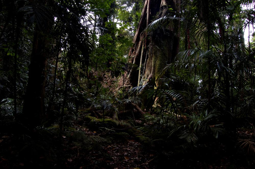 untitled #58 [dorrigo national park, new south wales, australia, 2010]