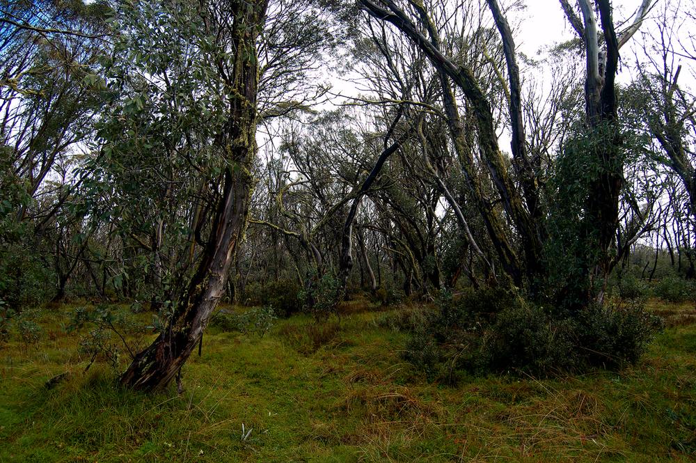 untitled #187 [raspberry hill picnic area, alpine national park, victoria, australia, 2010]