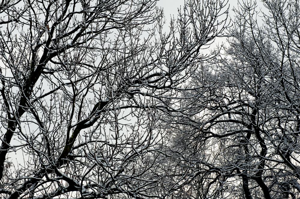 untitled #43 [nightingale gardens, wood green, london, england, 2012]