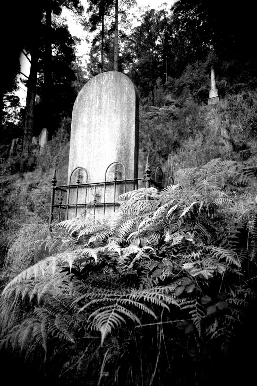 grave with ferns  [walhalla public cemetery, walhalla, victoria, australia, 2005]