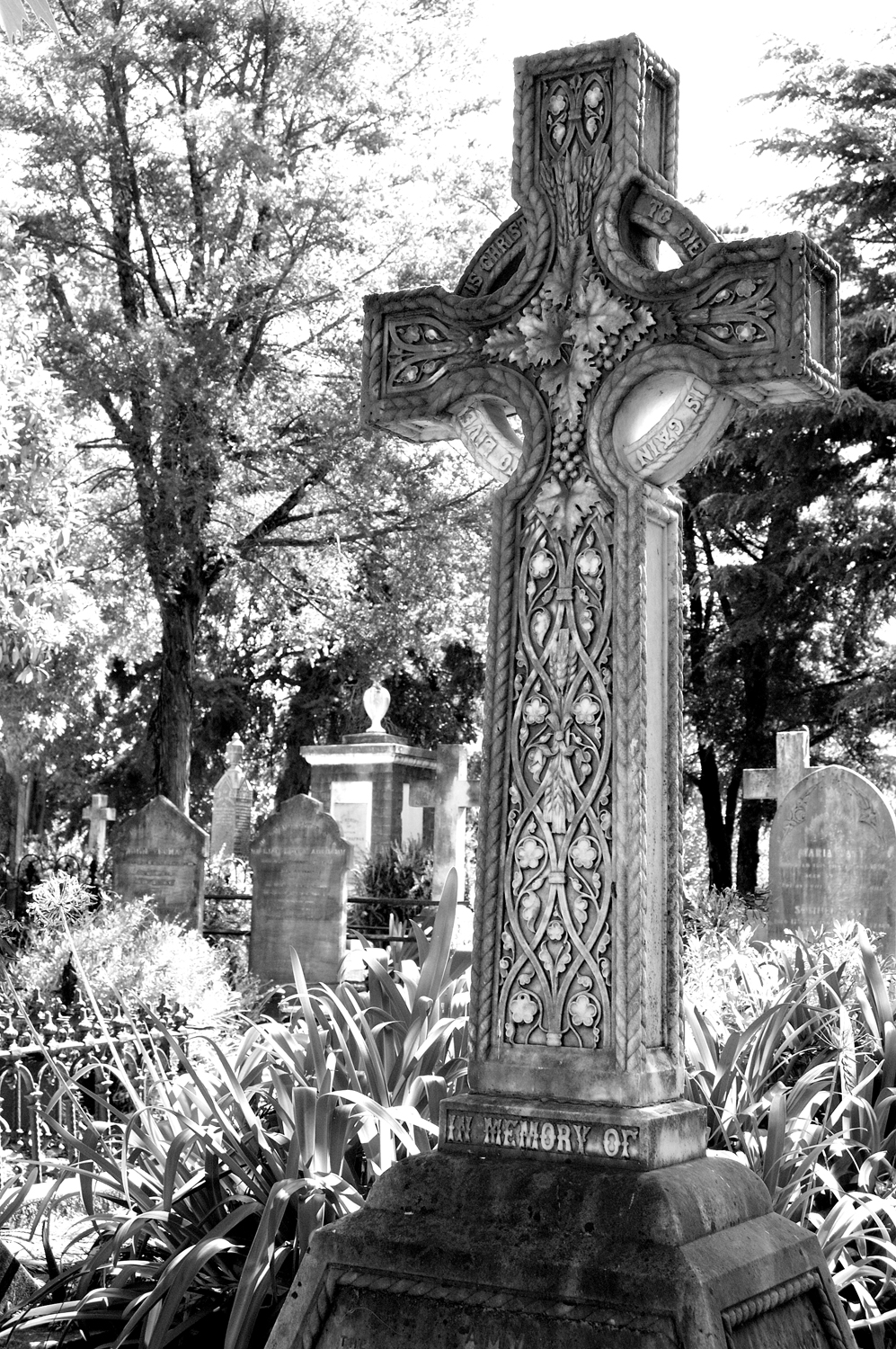 untitled #104 [napier cemetery, napier, hawke's bay, new zealand, 2005]