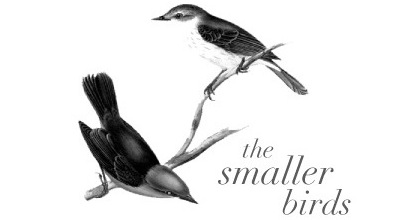 the smaller birds