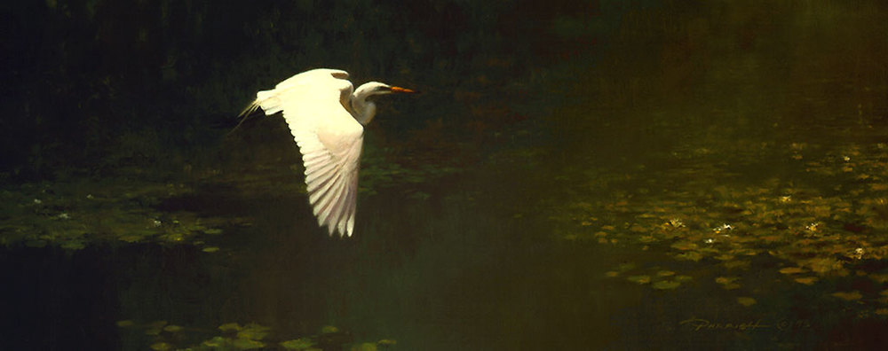 Parrish-Bradley_02-Great-White-Egret-.jpg