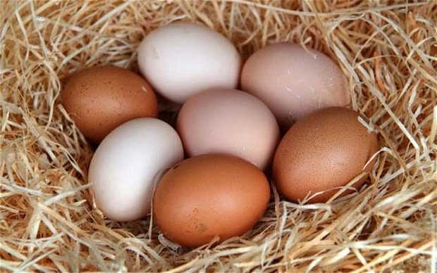 Chicken Eggs -Eggs like no other, from very happy free-range chickens: dark orange yolks, superior flavor profile, packing an amazing protein punch. Sold by the dozen.