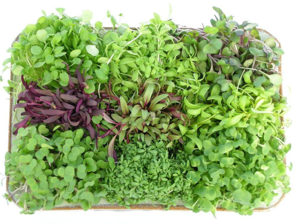 Micro Greens -Mixed mild & spicy micro greens, beautiful as a garnish, or as the entire meal! Just delicious. Sold in packages of 4oz. each.