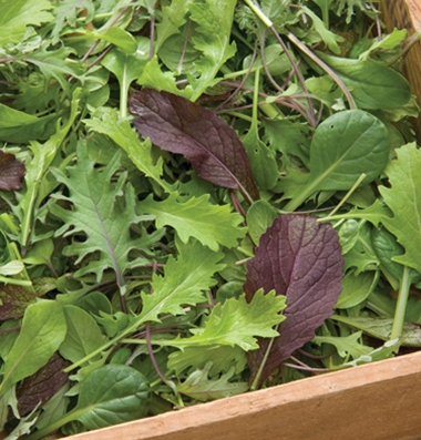 Ovation Mix - Spicy greens mix with baby arugula, mizuna, mustard greens & pac choi, stands up well to braising & saute-ing, but also nice mixed into your salad greens for some extra punch. Each Ovation Mix is sold as an 8 oz. bag.