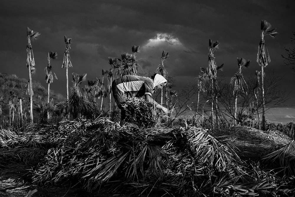"""""""Bravos"""" documenta a extração da cera de carnaúba no Vale do Açu. © Jean Lopes"""