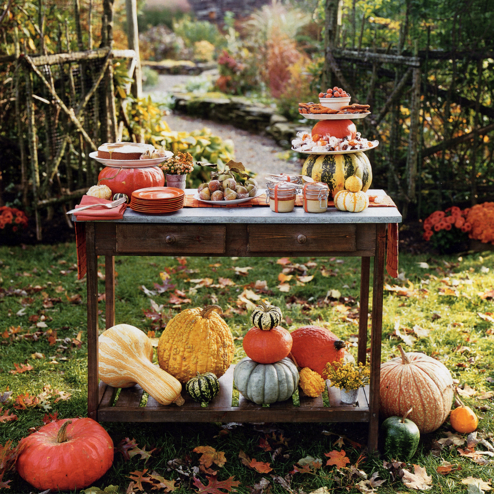 PHOTO COURTESY OF MARTHA STEWART LIVING