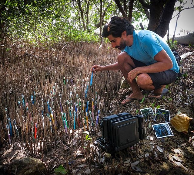 Behind the scenes in 2014, positioning toothbrushes in the young mangroves… . #washedupproject #tubasuranuestroplaneta #yourgarbageourplanet #siankaan #cleanyourteeth #cleanyourplanet #mangrove #mangle #behindthescenes #largeformat #toyocamera #4x5