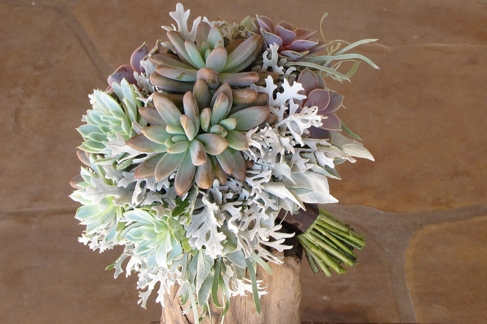 Hand-tied bridal bouquet by wedding florist Floral Verde in Cincinnati, Ohio, with Echeveria 'Perle von Nurnberg', Echeveria 'Violet Queen', Pachyveria 'Blue Pearl' and dusty miller.