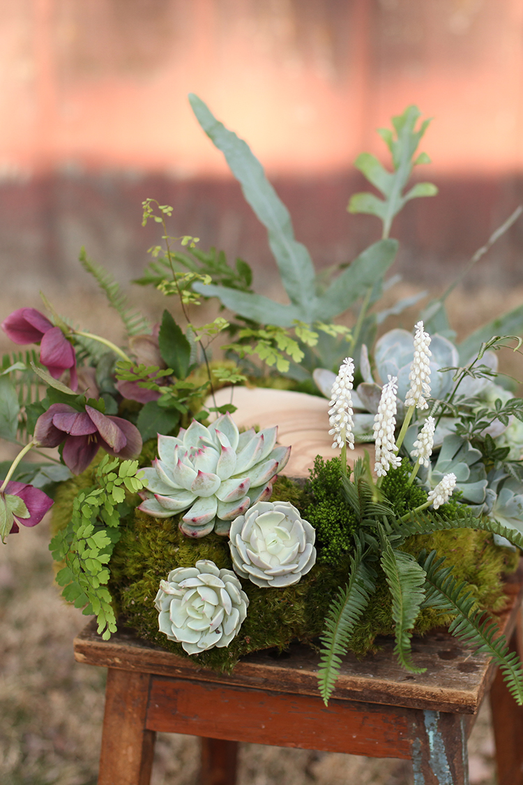 Woodland centerpiece by Floral Verde LLC in Cincinnati, Ohio, with Juniper slices, burgundy helleborus, white muscari, Echeveria colorata, Echeveria lucita, Echeveria derenbergii, Echeveria Lola, Kalanchoe tomentosa, Blue Star fern, Haworthia fasciata, Silver Lace fern, green trachelium, Kimberly Queen fern, mood moss and Maidenhair fern.