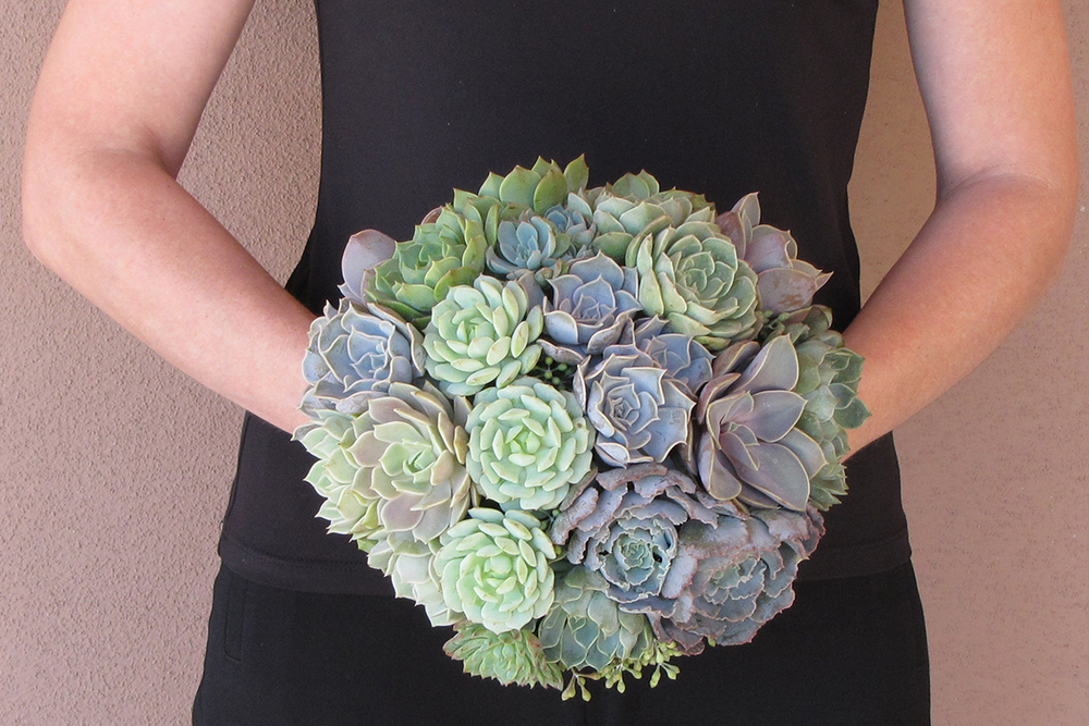Succulent bridal bouquet with Echeveria hybrid 'Perle von Nurnberg', Echeveria shaviana 'Truffles', Echeveria 'Pollux', Echeveria minima, Echeveria hybrid 'Lola', Echeveria derenbergii 'Painted Lady', Echeveria 'Ramillette', Echeveria 'Allegra', Graptoveria amethorum and seeded eucalyptus, by Cincinnati wedding florist Floral Verde LLC.