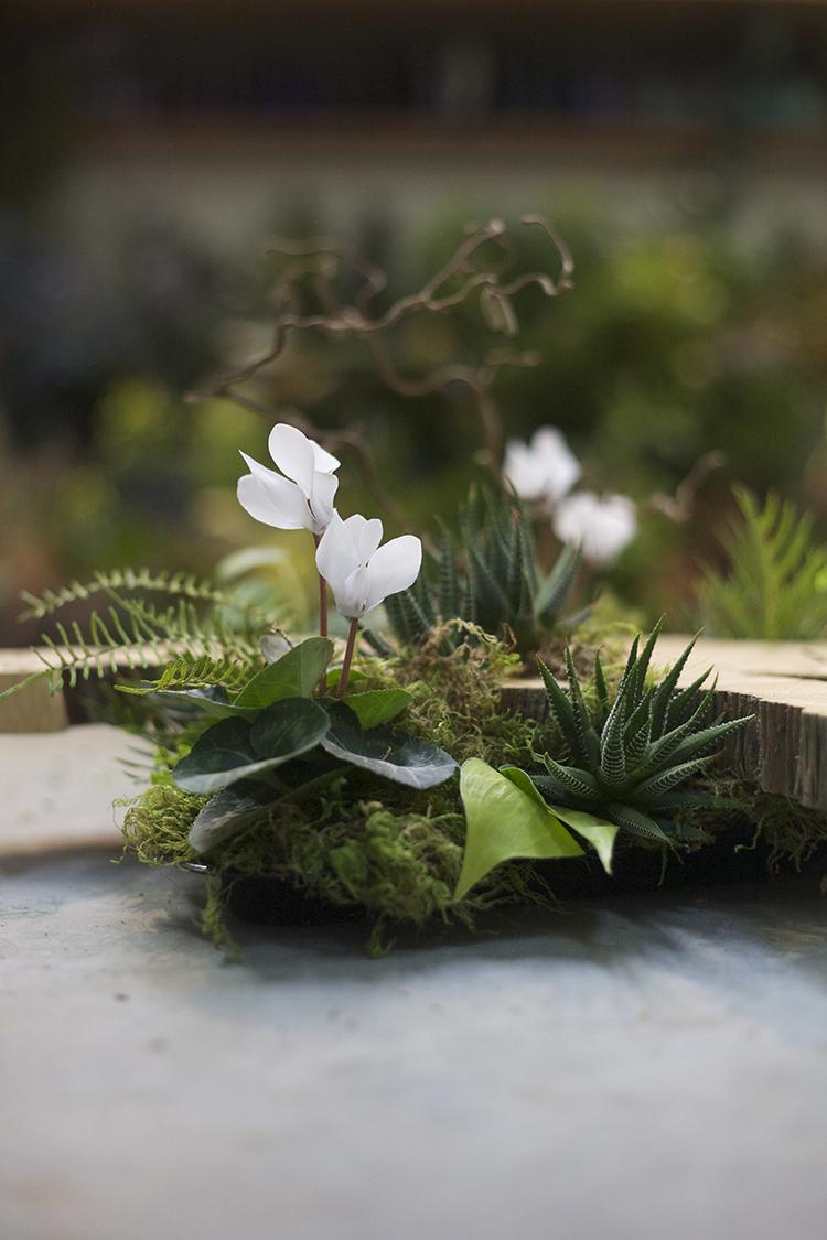 Floral Verde Llc Woodland And Succulents