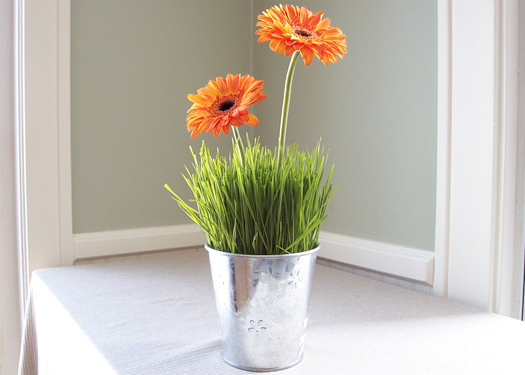 wheatgrass centerpiece with gerberas in a galvanized pot