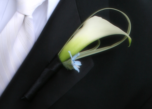 boutonniere with a single white mini calla, variegated lily grass and tweedia