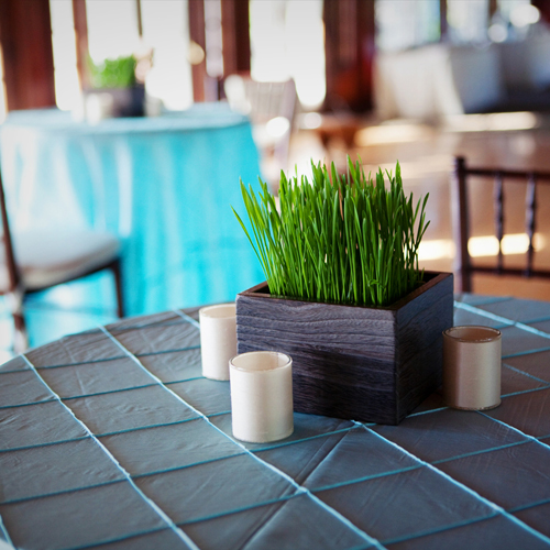 cocktail table with wheatgrass centerpiece