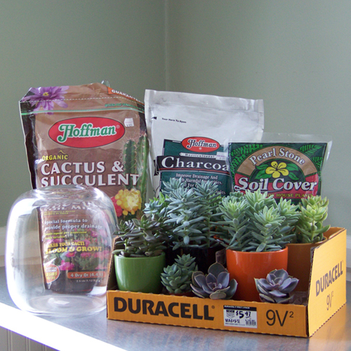 materials for a succulent terrarium
