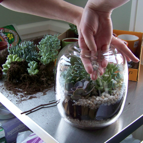 finish the terrarium with another layer of stone
