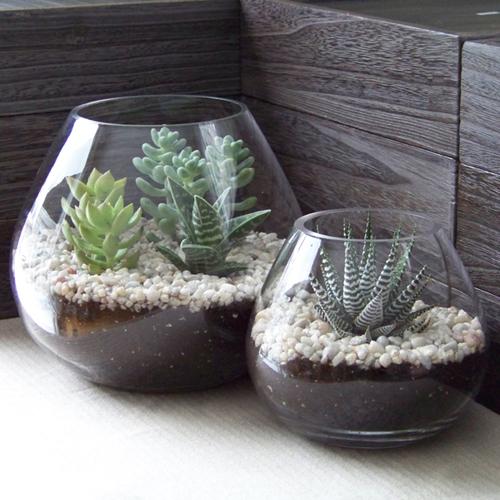 Succulent terrariums by Floral Verde LLC