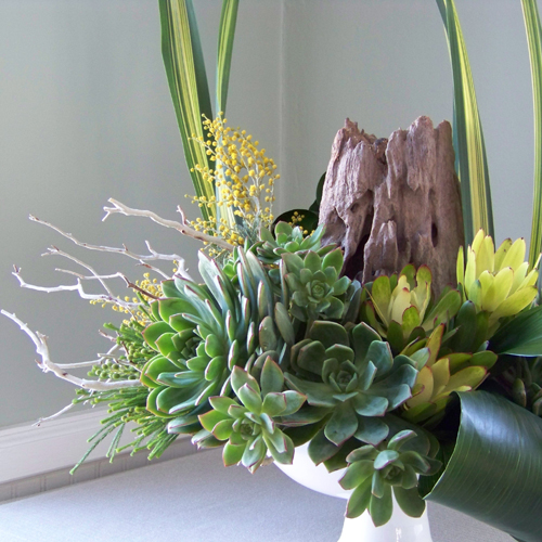 close up of arrangement with manzanita branches, a reclaimed wood stump, succulents, aspidistra, berzelia, leucadendron, acacia, and flax in a ceramic pedestal bowl