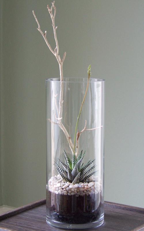 5″x12″ cylinder vase with a Haworthia fasciata and a manzanita branch