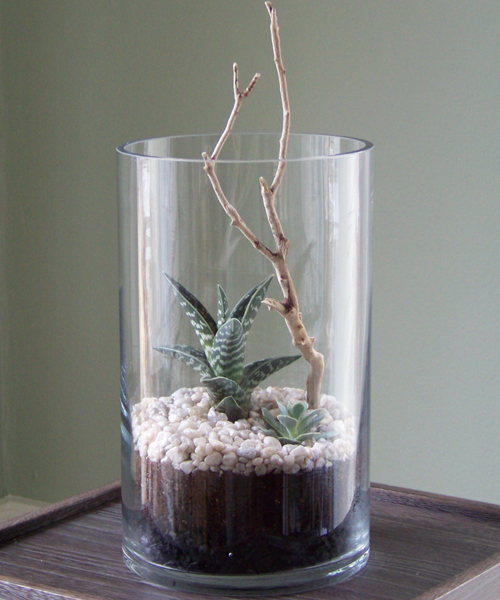 "6″x10″ cylinder vase with an Aloe variegata ""Pheasant Breast Aloe, an Echeveria and a manzanita branch"