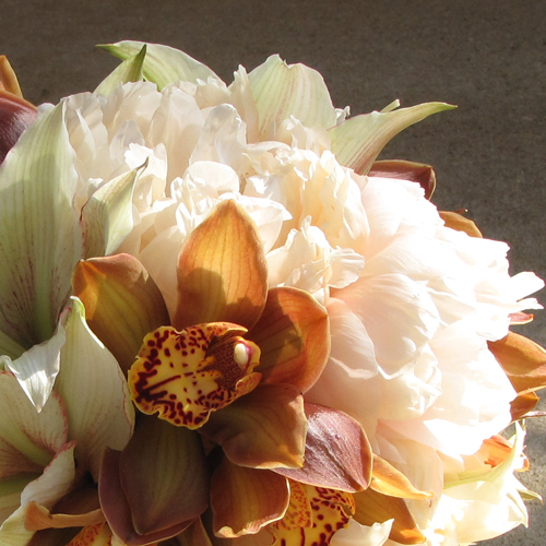 close up of hand-tied bouquet with pale green amaryllis, La Vie Carina cymbidiums and Coral Charm peonies