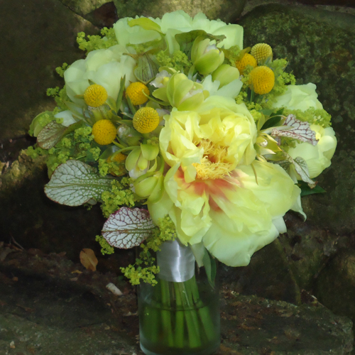 hand-tied bouquet with yellow peonies, craspedia, alchemilla, green mini cymbidiums, green leucadendron and sarracenia