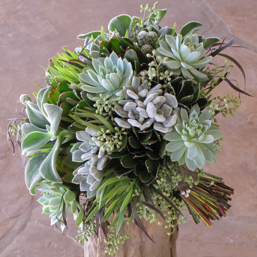 Hand-tied bridal bouquet with Echeveria 'frosty,' Echeveria 'Violet Queen,' Echeveria coccinea, Mammillaria gracilis fragilis, green leucadendron, seeded eucalyptus and agonis