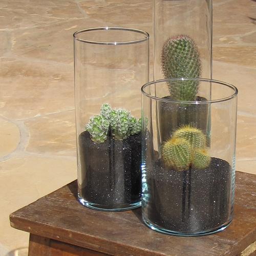 Centerpiece with Red-headed Irishman (Mammillaria spinosissima), Thimble Cactus (Mammillaria gracilis fragilis), and Golden Ball Cactus (Notocactus leninghausii)