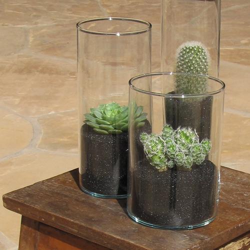 Centerpiece with Bristle Brush Cactus (Mammillaria pilcayensis), Echeveria 'Ramillette', and Thimble Cactus (Mammillaria gracilis fragilis')